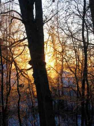 a sunrise is seen through the trees