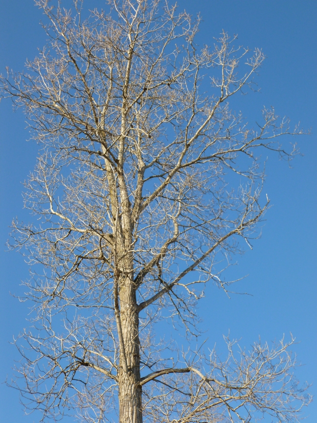 a winter tree